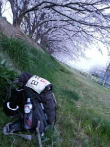 満開の桜を眺めながら野で眠りにつく。